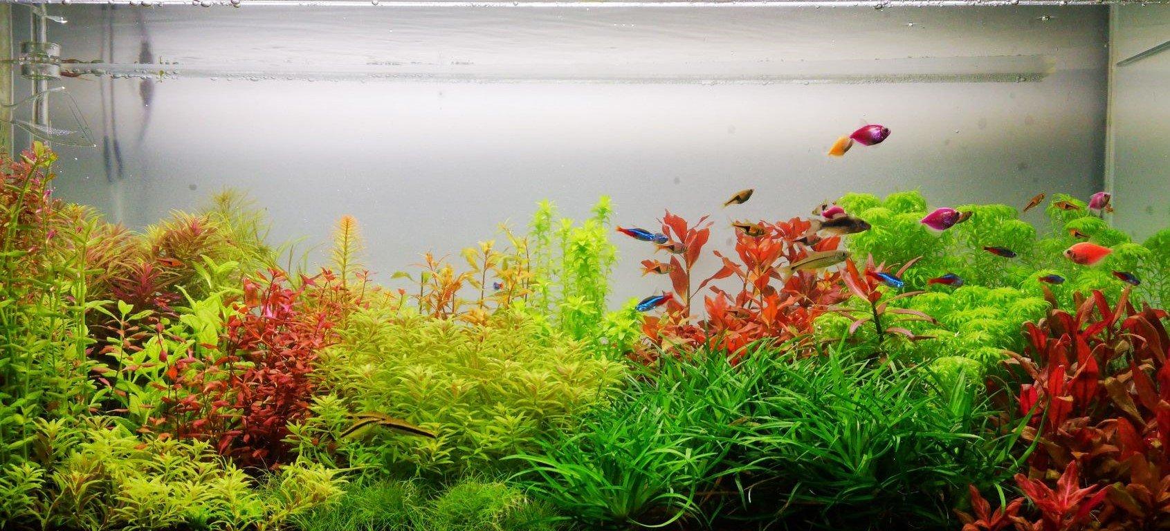 ce am nevoie pentru acvariu
